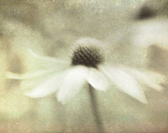 Daisy Art Print, Sepia Photograph,  Vintage Inspired Art, Cottage Chic Decor, Rustic Decor. Flower Wall Art