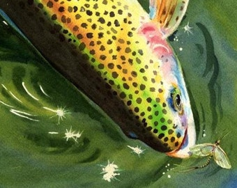 Rainbow Trout and Mayfly Watercolor fish 8X10 art print Cottage Decor for the fly fisherman stream angler by Barry Singer
