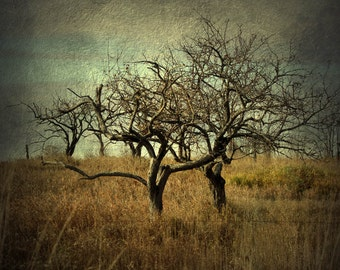 tree photograph landscape photography twin trees dark art home decor