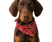 DOBERMAN (uncropped) Red Dog with Bandanna on ONE 16 inch Square Fabric Panel for Quilting and Sewing