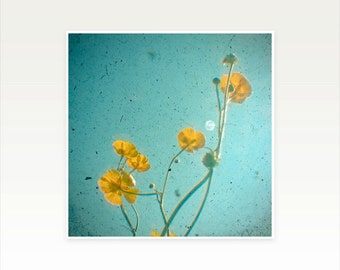 Buttercups, Nature Photography, Flower Art, Turquoise Decor, Summer, Floral - Happiness Is