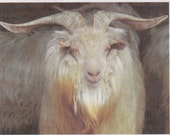 Adopt  Pirate our Cashmere Goat for an 1 month,and receive 2 skeins of yarn adoption letter and photo