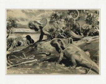Vintage 1963 Dinosaur Print - Protoceratops