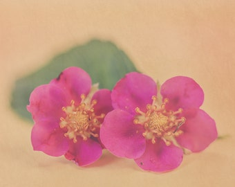 Two Pink Flowers - Floral Home Decor Photography