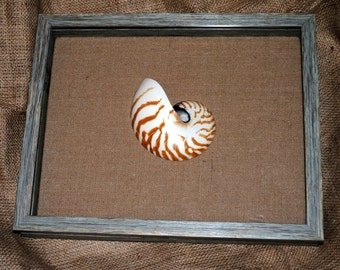 Nautilus Shell Shadowbox