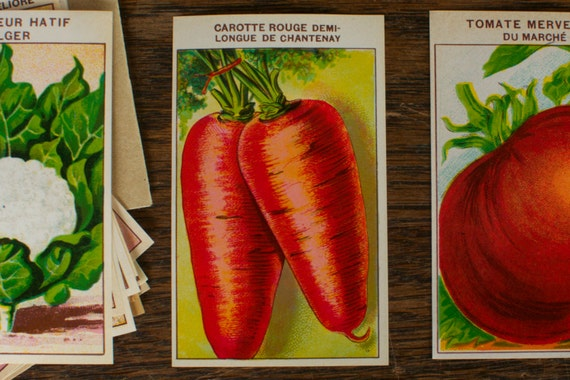 Chantenay Red Cored Carrot Seeds