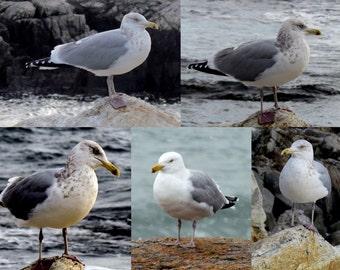 Seagulls on New Hampshire Seacoast Digital Collage Photo