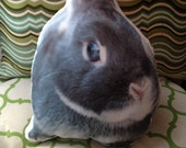 Orzo the grey bunny rabbit  pillow
