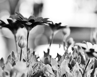 "Special Edition - 5""x7"" Dramatic Black and White Floral Photo Duo - Metallic Finish - Ready to Ship"
