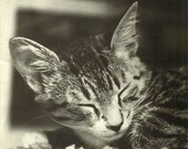 Vintage Print of Squeaky, aTabby Kitten, adorable Cat  Portrait Black & White Photography