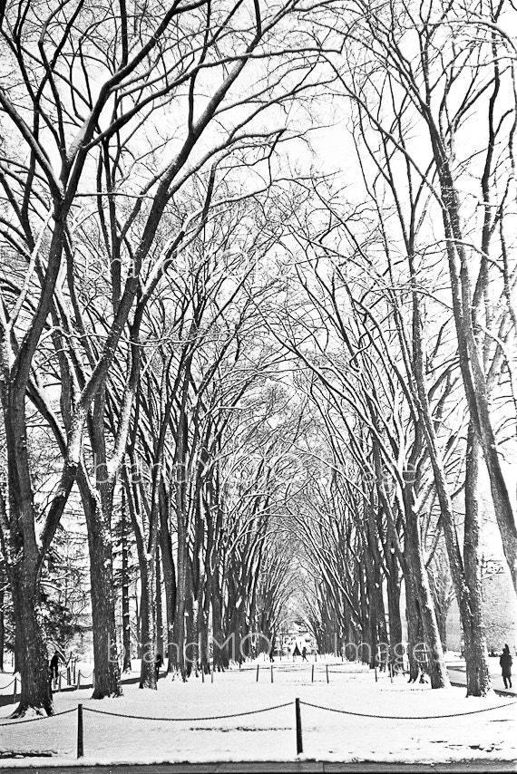 Vintage penn state Photograph winter football 60s PSU original black white gift - Wintertime Elm Trees along the mall c. 1966 - 409 joepa