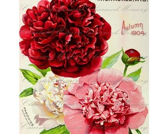 Peony Digital Collage Sheet SALE!!! Vintage Seed Catalog Digital Download Peonies, Floral, Victorian, Nature Large Image #1 INSTANT Download