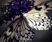 Dreamy Black, Purple and White Butterfly Photography Art