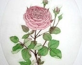 Etching / limited edition original etching (printmaking / graphic art) / original print / original art / botanical print / flower - 'Rose'