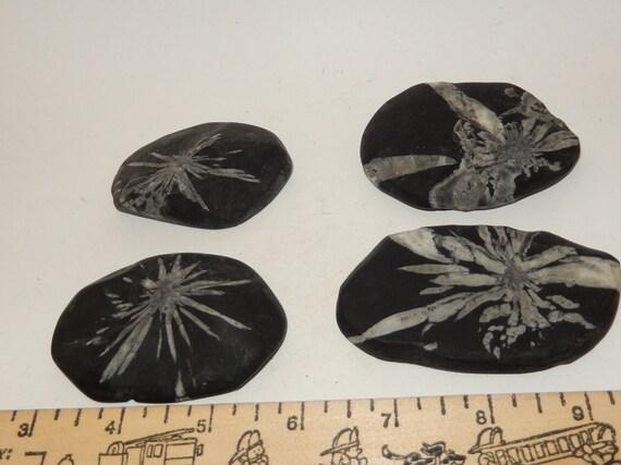 Large Chysanthemum Stone