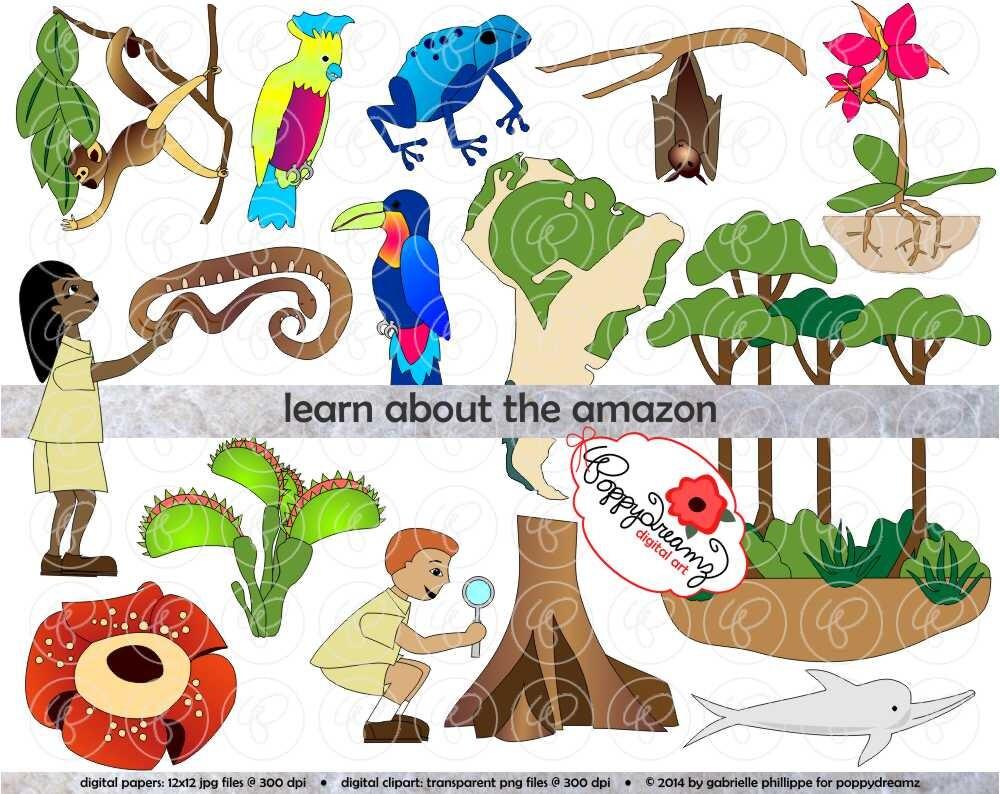 amazon rainforest trees clipart. zoom amazon rainforest trees clipart o