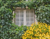 Travel Photography, Rustic Countryside Decor, Daisies, Ivy Photo, Country House, Window Print, Yellow, Green, Fall Photography - Waking up