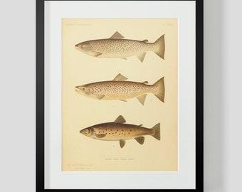 Trout Salmon Fish Print Plate 39