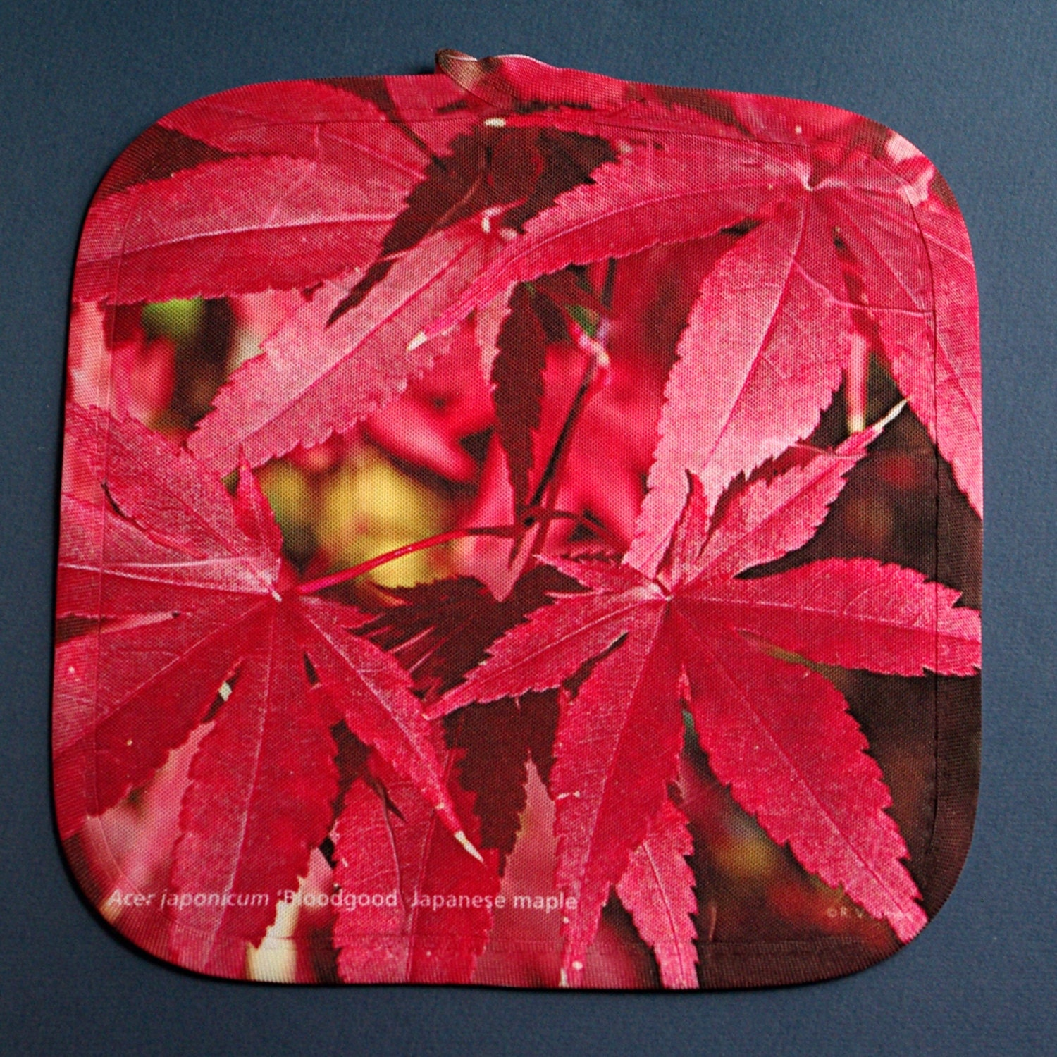Red Pot Holders: RED Pot Holder With Japanese Maple Leaves Deep Red Autumn