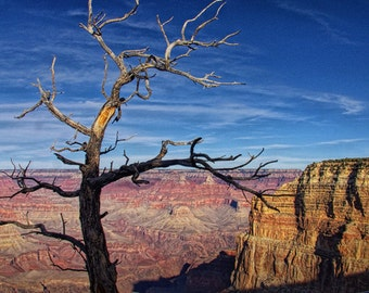 Lone Dead Tree near Sunset at the Grand Canyon National Park South Rim in Arizona No.3404 - A Fine Art Nature Panorama Landscape Photograph