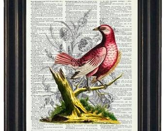 BOGO SALE Dictionary Art Print Wall Decor Bathroom Print on Dictionary Page Red Bird