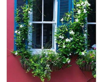Art, Photography, City Photography, Window Boxes, Charleston, Wall Art, Fine Art Print