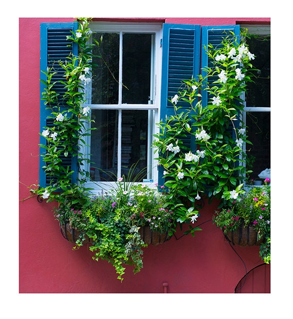 Art, Photography, City Photography, Window Boxes, Charleston, Wall Art, Fine Art Print
