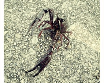 Crawfish Fight Stance! by J. Ensley