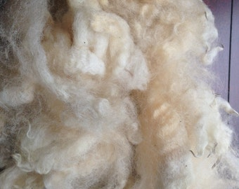 DorsetxBorder Cross Raw Wool Fleece 4oz Spinning Fiber Felting Fiber