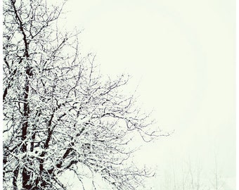 Winter's Delight, snow photography, trees, winter, home decor, Holiday art