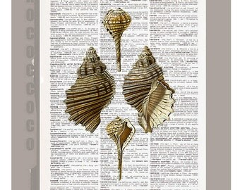 Sea SHELL  -ARTWORK  printed on Repurposed Vintage Dictionary page 8 x 11 -Upcycled Book Print