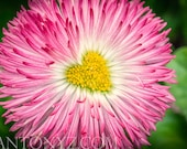 Heart shape vibrant pink spring summer flowers 8 x 10 Fine Art Print