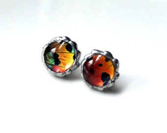 Sunset Moth Butterfly Earrings, Colorful Moth Earrings, Post Earrings