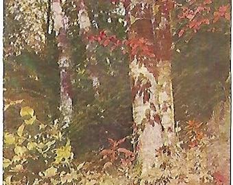 Autumn Leaves Birch Railroad Cancellation 1908 Vintage Postcard American Art Series
