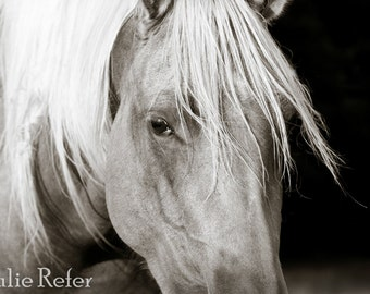 Horse Photography Equestrian Art