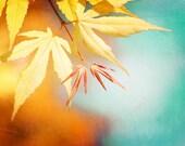 "Autumn Photography - fall yellow leaves nature orange leaf wall art aqua blue teal botanical print 11x14, 8x10 Photograph, ""Autumn Splendor"""