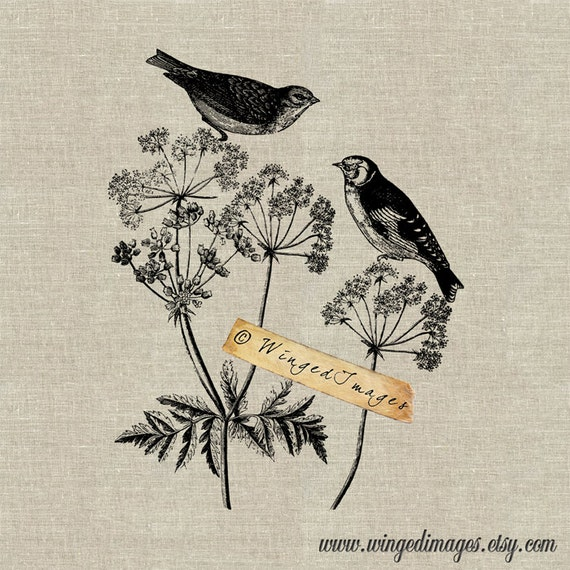 Garden Birds. Instant Download Digital Image No.28 Iron-On Transfer to Fabric (burlap, linen) Paper Prints (cards, tags)