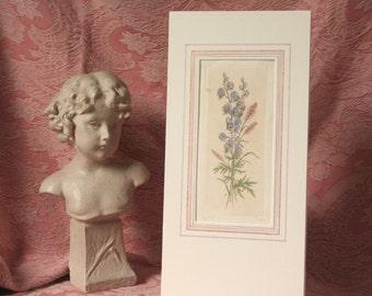 Original antique engraving, hand painted botanical engraving, antique botanical original print