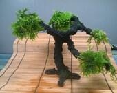 Premium Large Aqua Bonsai Tree For the Aquarium (SALE)