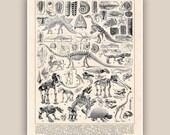 Paleontology Dinosaur Prehistoric Animal Skeleton Print dinos anatomy illustrations, kids room decor, educational decorative arts