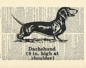 Dachshund dog pet Dictionary art vintage animal on Upcycled Vintage Dictionary Paper - 7.75x11