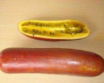 5 Casabanana Seeds-1074