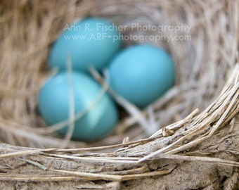 Blue Eggs in Robin's Nest - Square Canvas Gallery Wrap, Fine Art Photography, Easter Decor, Egg Photo, Nest Photo, Easter Gift