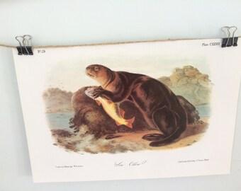Sea Otter Vintage Audubon Book Plate