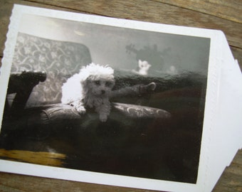 Vintage Snapshot - White Fuzzy Dog In Chair - Poodle