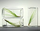 Set of 3 Modern Air Plant Glass Rectangle Terrariums, Table Decor, Geometric Glass Terrariums, Geometric Vases, Air Plant Terrarium Gift Set