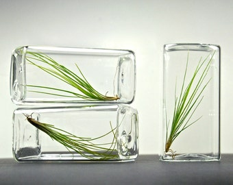 Set of 3 Modern Air Plant Glass Rectangle Terrariums, Table Decor, Geometric Glass Terrariums, Geometric Vases, Air Plant Terrarium Gift Set
