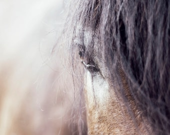 Digital download - photography decor horse portrait animal pet country rustic shabby chic nursery art
