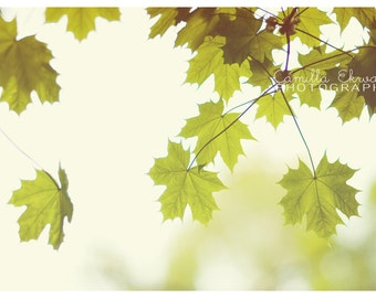 Digital download - leaf green soft summer photography botanical art decor nature foliage woodland tree