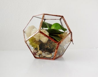 Geometric Glass Terrarium, Dodecahedron, Handmade Glass Terrarium, Stained Glass, Modern Terrarium  for Indoor Gardening. MADE TO ORDER